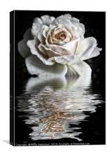 Reflected White Rose, Canvas Print