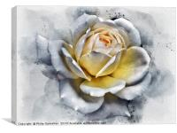 watercolor painting of a large white rose with glo, Canvas Print