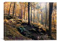 sunlit woodland in early autumn, Canvas Print