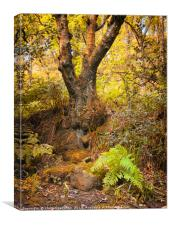ancient forest tree and fern, Canvas Print