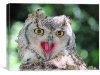 vocal - long eared owl, Canvas Print