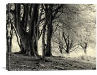 monochrome imisty beech woodland, Canvas Print
