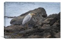 Heron fishing on beach, Canvas Print