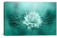 Love-in-a-mist, Canvas Print