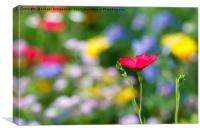 Pink flower against colorful floral meadow, Canvas Print