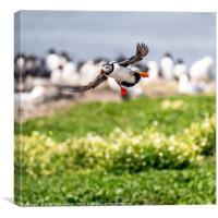 Incoming, Canvas Print