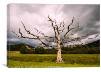 Fork Lightening Tree, Canvas Print