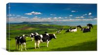 Cattle in the Dorset countryside overlooking Portland, Canvas Print