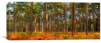 New Forest trees in autumn, Canvas Print