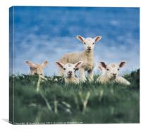 Leader of the Pack, Canvas Print