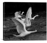 Geese on the river, Canvas Print