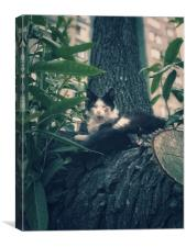 Yawning cat on a tree, Canvas Print
