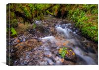 The River at Postywood, Preseli Hills., Canvas Print