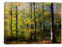 Autumn Light and Colours in Slebech Wood., Canvas Print