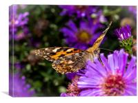 The Eye of the Painted Lady (Vanessa Cardui), Canvas Print