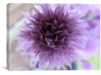 Chive Flower                              , Canvas Print