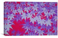 Japanese Acer Maple, Canvas Print