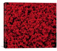 Red Shrubby Veronica, Canvas Print