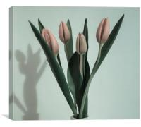 Pale Pink Tulips, Canvas Print