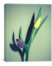 Dancing Tulips, Canvas Print