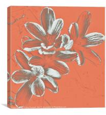 Crocus Focus, Canvas Print