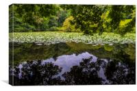 Lily Lake at Canonteign in Devon, Canvas Print