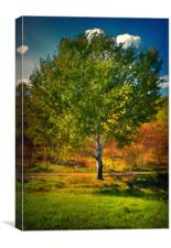 the dominant maple, Canvas Print