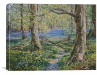 Bluebells at Whitemoss, Oil painting, Canvas Print