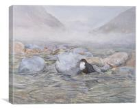 Dipper in the River, Watercolour, small sizes only, Canvas Print
