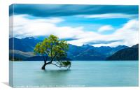 Lone Tree, Lake Wanaka, New Zealand, Canvas Print