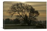 Winter tree silhouette, Canvas Print