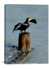 Cormorant drying its Wings, Canvas Print