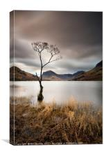 Buttermere Lone Tree Dawn, Canvas Print