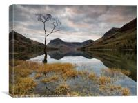 Sunrise Lone Tree Buttermere, Canvas Print