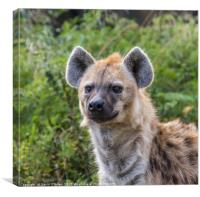 Spotted Hyena, Canvas Print