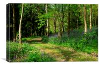 Bluebell Woods in Sussex, Canvas Print