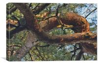 Out on a Limb, Canvas Print