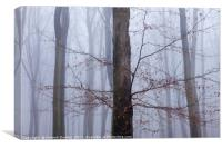 Misty Beeches, King's Wood, Canvas Print