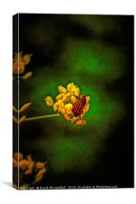 Striped Stink Bug, Canvas Print