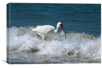 Florida White Ibis In The Surf, Canvas Print