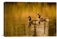 Canadian Geese at Sunset, Canvas Print