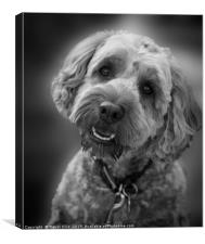 Give me a biscuit, Canvas Print