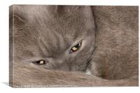Im Watching You, Canvas Print