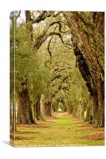 Line of Oak Trees to Distance, Canvas Print