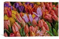 Many Colorful Tulips, Canvas Print