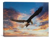 Eagle on Dramatic Sky, Canvas Print