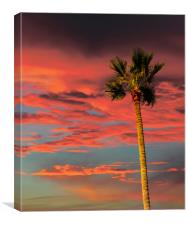 Palm Tree on Tropical Sunset, Canvas Print