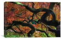 Twisted Tree, Canvas Print