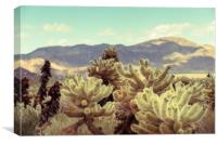 Super Bloom Cactus 7380 Joshua Tree Desert Califor, Canvas Print
