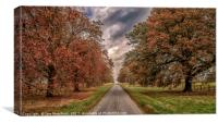 Autumn Avenue, Canvas Print